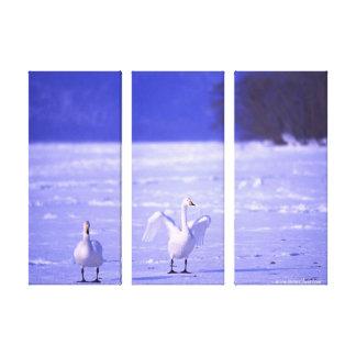 El cisne blanco hermoso estiró la impresión de la  impresión en lona