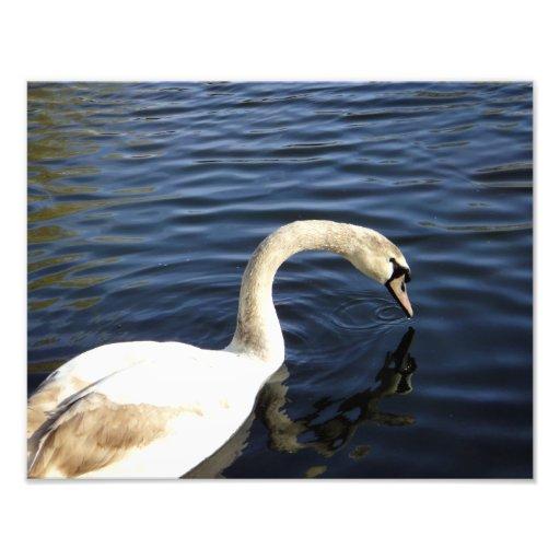 el cisne de St Stephen Fotografia
