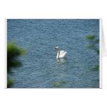 El cisne hermoso felicitacion