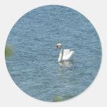 El cisne hermoso pegatina redonda