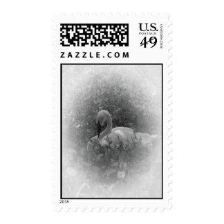 El cisne sellos