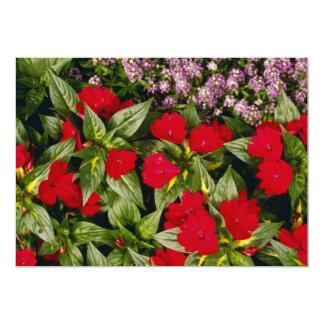 El clavel florece las flores anuncios