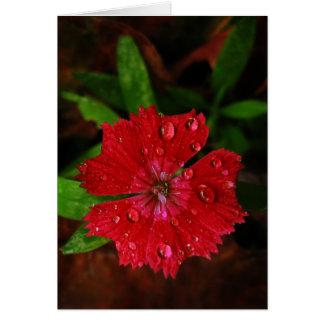 El clavel rojo con las gotas de agua le agradece tarjeta de felicitación