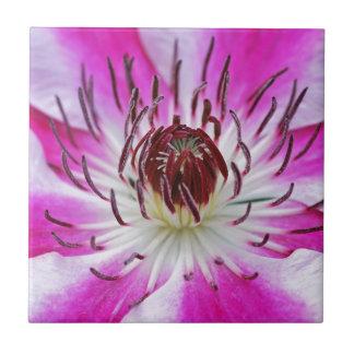 El Clematis florece el jardín de la planta de la Azulejo Cuadrado Pequeño
