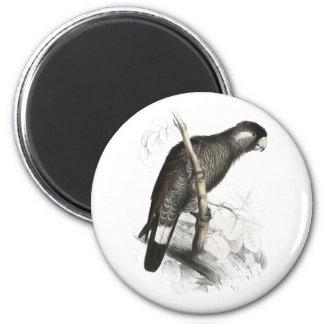 El Cockatoo de Baudin de Edward Lear Imán Redondo 5 Cm
