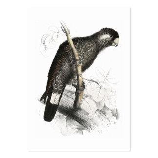 El Cockatoo de Baudin de Edward Lear Tarjetas De Visita Grandes