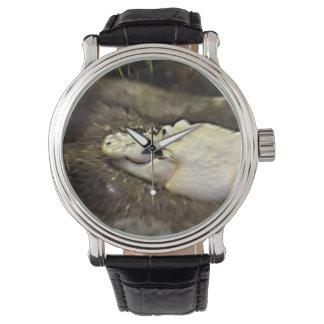 el cocodrilo blanco trippy enfocó reptil relojes