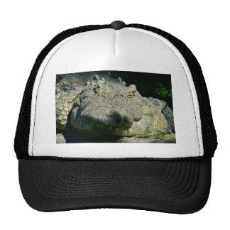 el cocodrilo del grrr chomp gorra