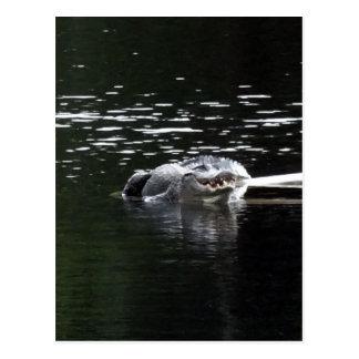 El cocodrilo es todas las sonrisas postales