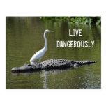 El cocodrilo y el egret postal