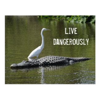 El cocodrilo y el egret tarjeta postal