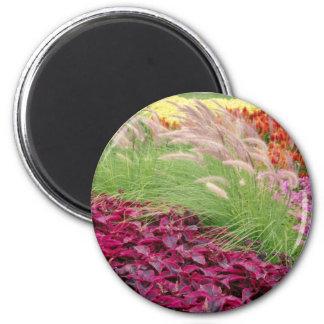 El coleo y la hierba de pampa rosados, Niágara par Imán Para Frigorífico