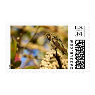El colibrí California, medio de Ana femenino de la Timbres Postales