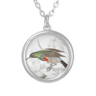 El colibrí colgante