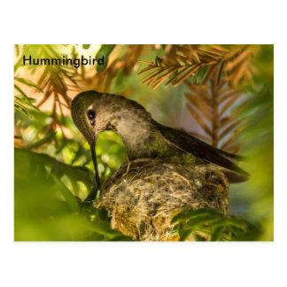 El colibrí construye una postal de la jerarquía