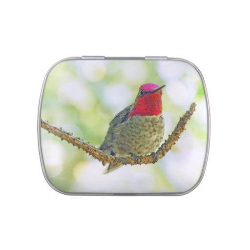 El colibrí de Ana