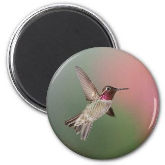 El colibrí de Ana Imán Para Frigorifico