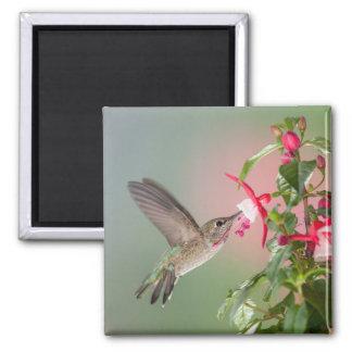 El colibrí de Ana Imanes De Nevera