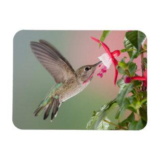 El colibrí de Ana Imanes De Vinilo