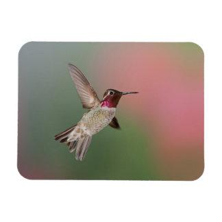 El colibrí de Ana Imán