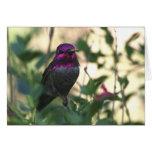 El colibrí de Ana - Joe Sweeney - tarjeta