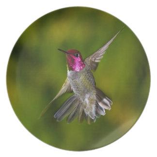 El colibrí de Ana Platos De Comidas