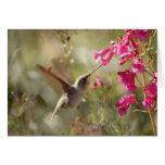 El colibrí de Card_Anna del colibrí Tarjeta De Felicitación