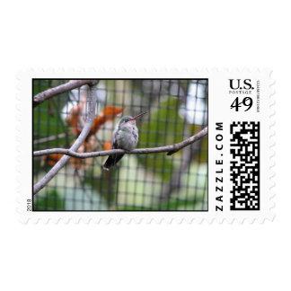 El colibrí de Helaine Sello
