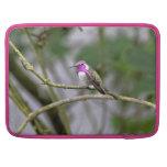 El colibrí de la costa fundas para macbooks