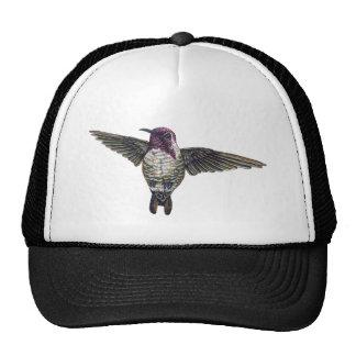 El colibrí de la costa gorro