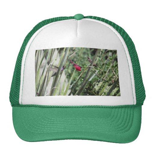 El colibrí de la costa gorros bordados
