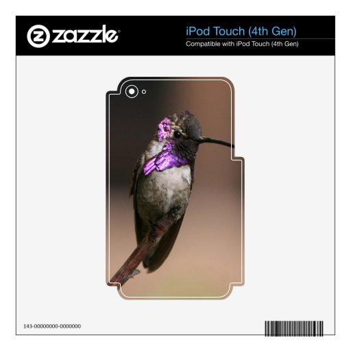 El colibrí de la costa iPod touch 4G calcomanías