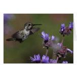 El colibrí de la costa - Joe Sweeney - tarjeta