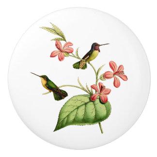 El colibrí de la costa pomo de cerámica