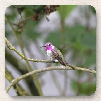 El colibrí de la costa posavaso