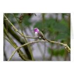 El colibrí de la costa tarjeta de felicitación