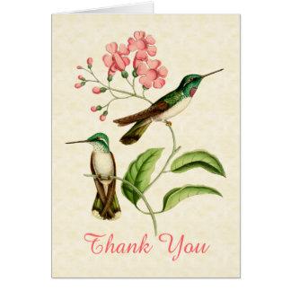 El colibrí de la gema de la montaña le agradece ta