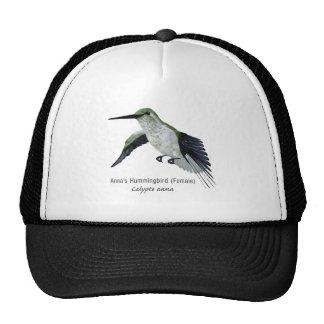 El colibrí femenino de Annas con nombre Gorras De Camionero