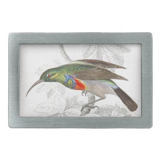 El colibrí hebilla de cinturón rectangular