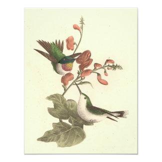 """El colibrí Rojo-throated (colubris de Trochilus) Invitación 4.25"""" X 5.5"""""""