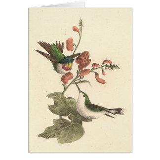 El colibrí Rojo-throated (colubris de Trochilus) Tarjeta De Felicitación