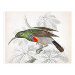 El colibrí tarjetas postales