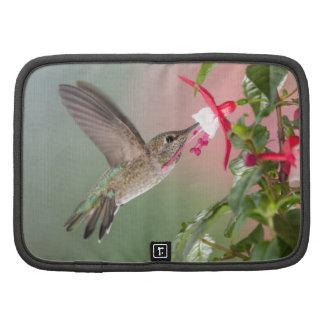 El colibrí y Fuschia de Ana Organizador