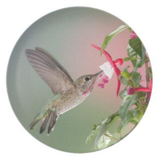 El colibrí y Fuschia de Ana Plato
