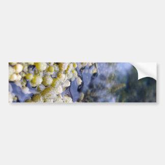 El collar de Neptuno Pegatina Para Auto