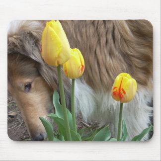 El collie y los tulipanes tapetes de raton