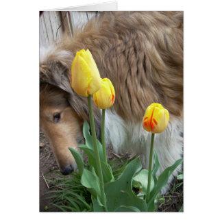 El collie y los tulipanes tarjeta de felicitación