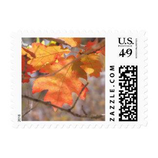 El color de los sellos del otoño