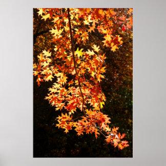 El color de oro de las hojas de otoño póster