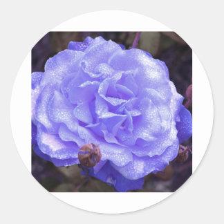 El color de rosa azul etiqueta redonda